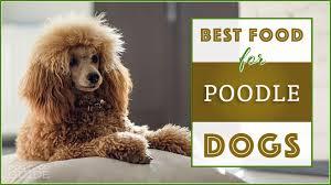 dog foods for poodles in 2020
