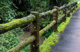 Concrete Fence Post Bridge With Moss Stock Photo Download Image Now Istock