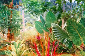 tropical garden in melbourne