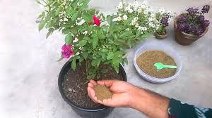 mustard cake organic fertilizer