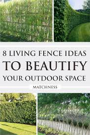 8 Living Fence Ideas To Beautify Your Outdoor Space Matchness Com