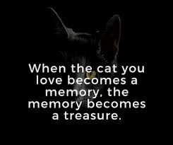 quotes about cat death for you to kiss away the pain enkiquotes