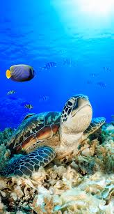 sea turtle iphone wallpapers top free