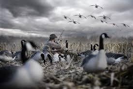 goose hunting wallpaper 4928x3280