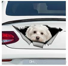 2020 Cute Maltese Car Sticker Pet Dog For Auto Car Bumper Window Wall Decal Sticker Decals Diy Decor Ct6215 From Mymother010 6 94 Dhgate Com