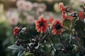 صور ورد جميل رقيق أحلي باقات الزهور صور أحلم صور ورد جميل