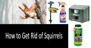 how to get rid of squirrels most