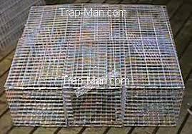 feral pigeon trap multi catch feral