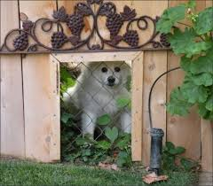 Fence Window For Dogs Simplemost