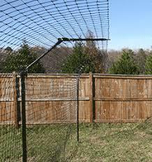 Cat Enclosures