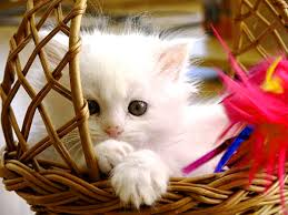 cute baby cats wallpapers wallpaper cave
