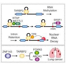 nuclear tarbp2 drives oncogenic