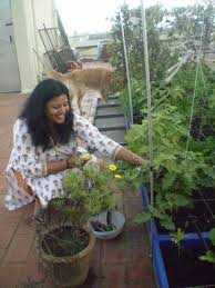 meet nithila organic roof top gardener