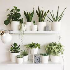 72 most amazing indoor plants wall