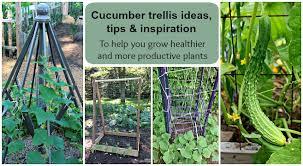 Cucumber Trellis Ideas Tips Inspiration For Vegetable Gardens