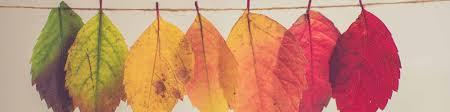 Autumn leaves - Curious