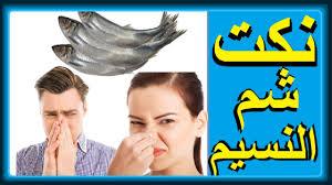 نكت شم النسيم نكت مصرية مضحكة جدا تموت من الضحك Youtube