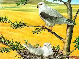 صور طيور متحركه اروع صور الطيور صبايا كيوت
