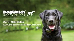 Why Choose Dogwatch Of The Endless Mountains Youtube