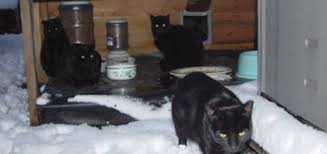 feral cat shelter for the winter