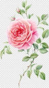 باقة وردة ورد باقة ورود وردة ورد حمراء وبيضاء Png