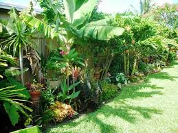Diy Tropical Fence Border Garden 2nd Update If You Ve Been Following The Progress Of This Project Tropical Backyard Tropical Garden Design Tropical Garden