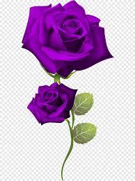 روز روز البنفسجي ترتيب الزهور Png