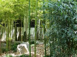 feng shui for a garden that flows with