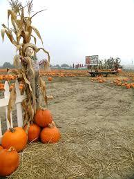 Pumpkin Patch Scarecrows With Wheelbarrow Stock Photo Image Of Balance Halloween 1364302