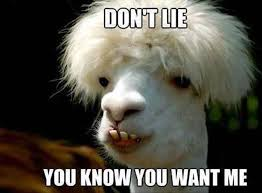 very funny goat meme photos and images