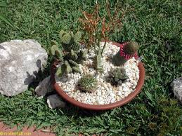 the art of growing cacti and succulents