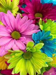 اروع صور زهور