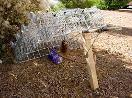 how to make squirrel traps homemade