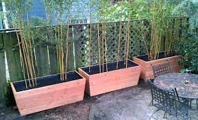 10 Bamboo Landscaping Ideas Garden Lovers Club