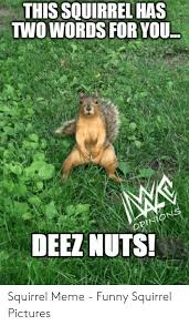 25 Best Memes About Squirrel Nuts Meme Squirrel Nuts Memes