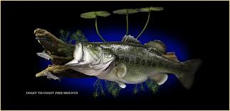 fish mounts fish mount replicas