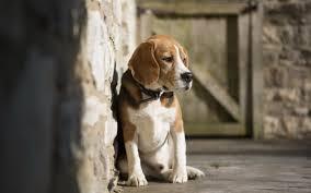 اشعر بالوحد صور كلاب جميلة صور حزينة Sad Images