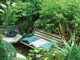 To Bamboo Or Not To Bamboo Planting For Privacy Australian Handyman Magazine