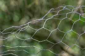 71 Chicken Fencing Wire Photos Free Royalty Free Stock Photos From Dreamstime