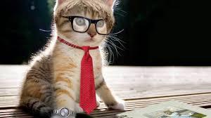 صور قطط جميلة لاجمل القطط في العالم عالم الحيوانات