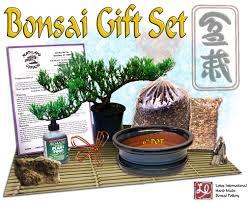 diy bonsai gift set 1 w 6 pot