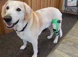 dog knee brace leg braces for dogs