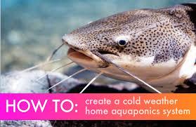 outdoor aquaponics tanks for frigid