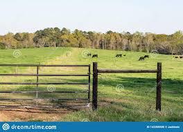 H Brace And Gate On Pasture Stock Image Image Of Husbandry Grass 143369505