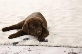 pet odor sns ecs carpet cleaners
