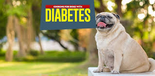 diabetic dog t what to feed a