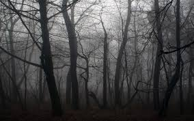 creepy forest backgrounds group 59