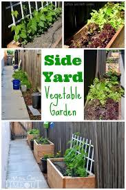 vegetable garden and diy planter boxes