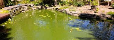 how to eliminate green pond water