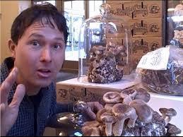 grow a mushroom mini farm kit in your